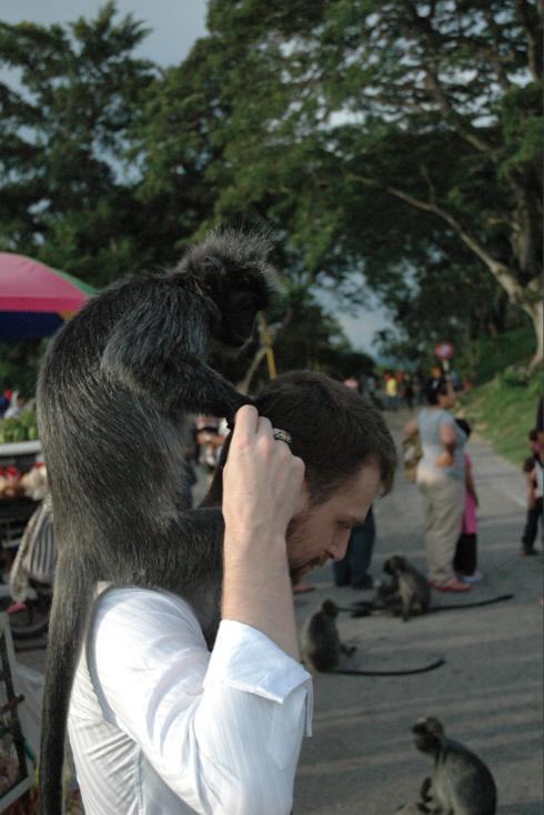 audran le guillou done à manger aux singes en malaisie