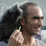 Franck laporte et les singes